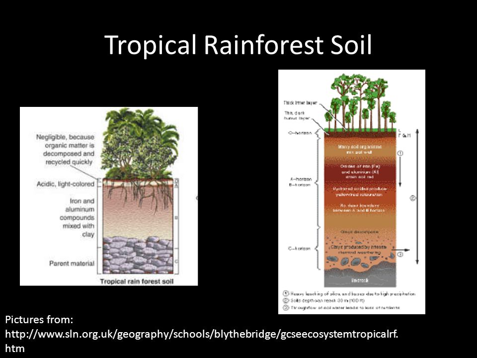 Tropical Rainforest Soil Pictures from: http://www.sln.org.uk/geography/schools/blythebridge/gcseecosystemtropicalrf.