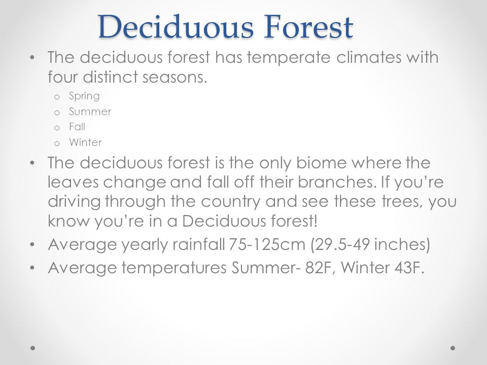What animals do you think live in the Deciduous forest.