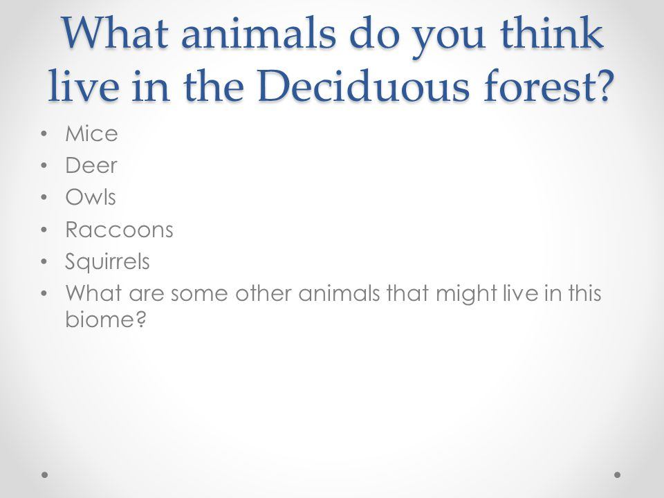 Plants (Vegetation) of the Deciduous Forest What are some plants that you grow in your back yard.