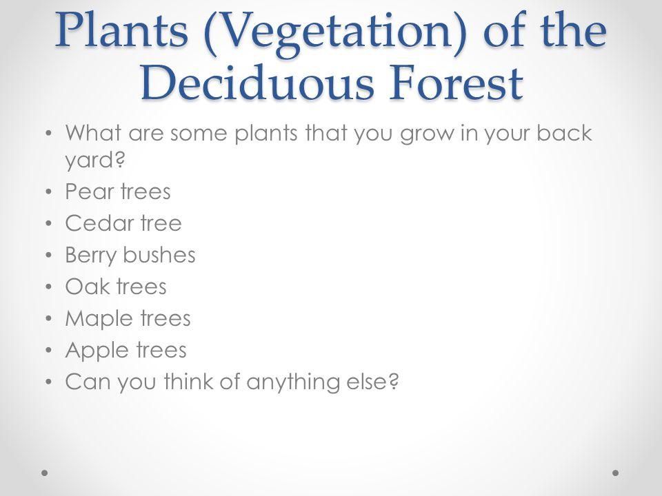 Plants and Vegetations of the Savannas Kangaroo Paw Jamaha tree Cycs