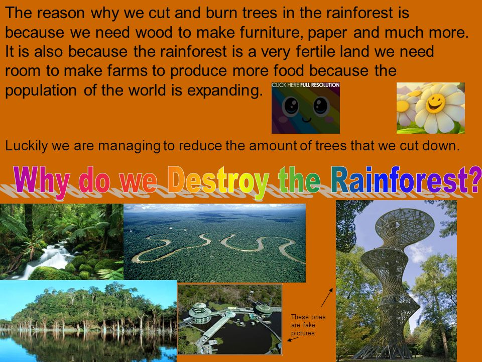 The reason why we cut and burn trees in the rainforest is because we need wood to make furniture, paper and much more.