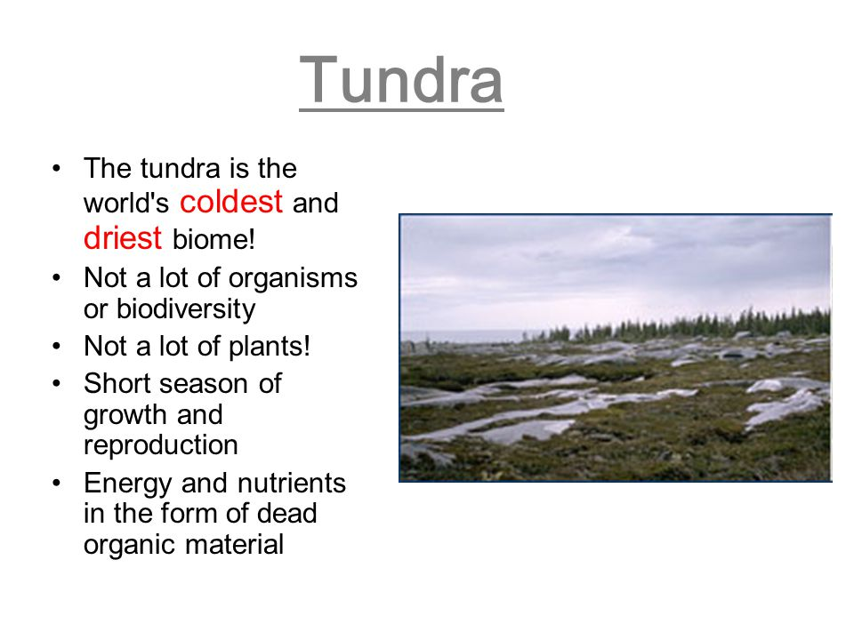 Tundra The tundra is the world's coldest and driest biome! Not a lot of organisms or biodiversity Not a lot of plants! Short season of growth and repr