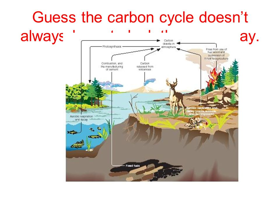 Guess the carbon cycle doesn't always have to look the same way.