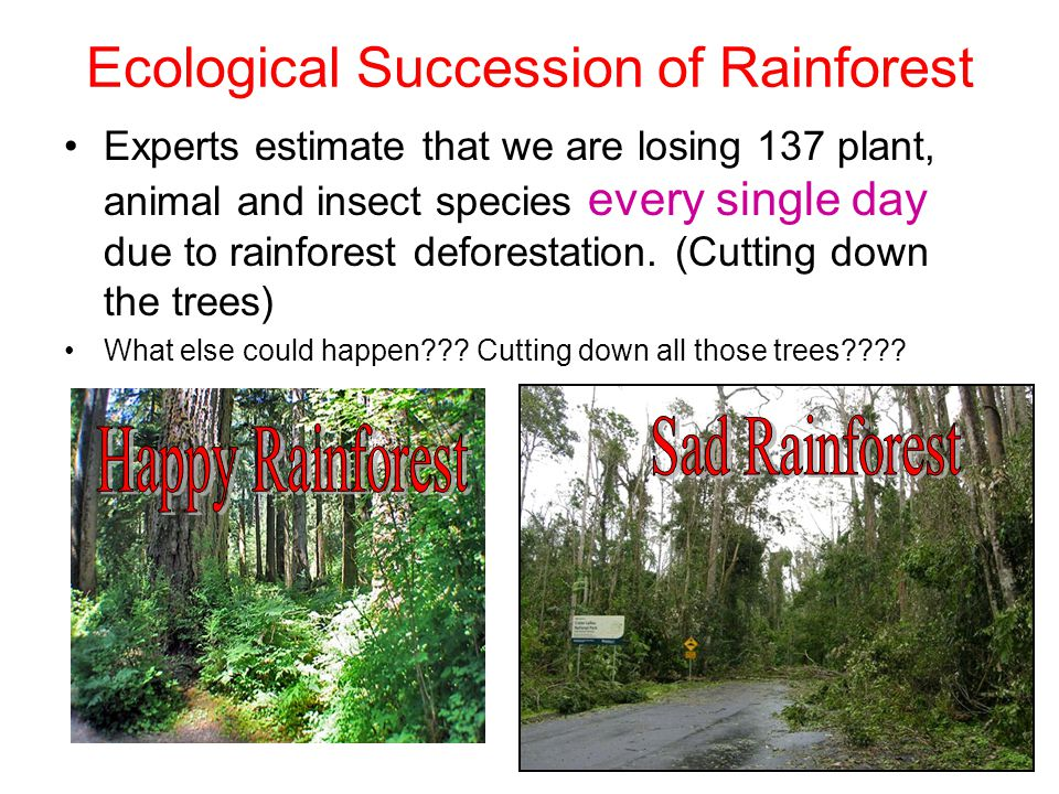 Ecological Succession of Rainforest Experts estimate that we are losing 137 plant, animal and insect species every single day due to rainforest defore