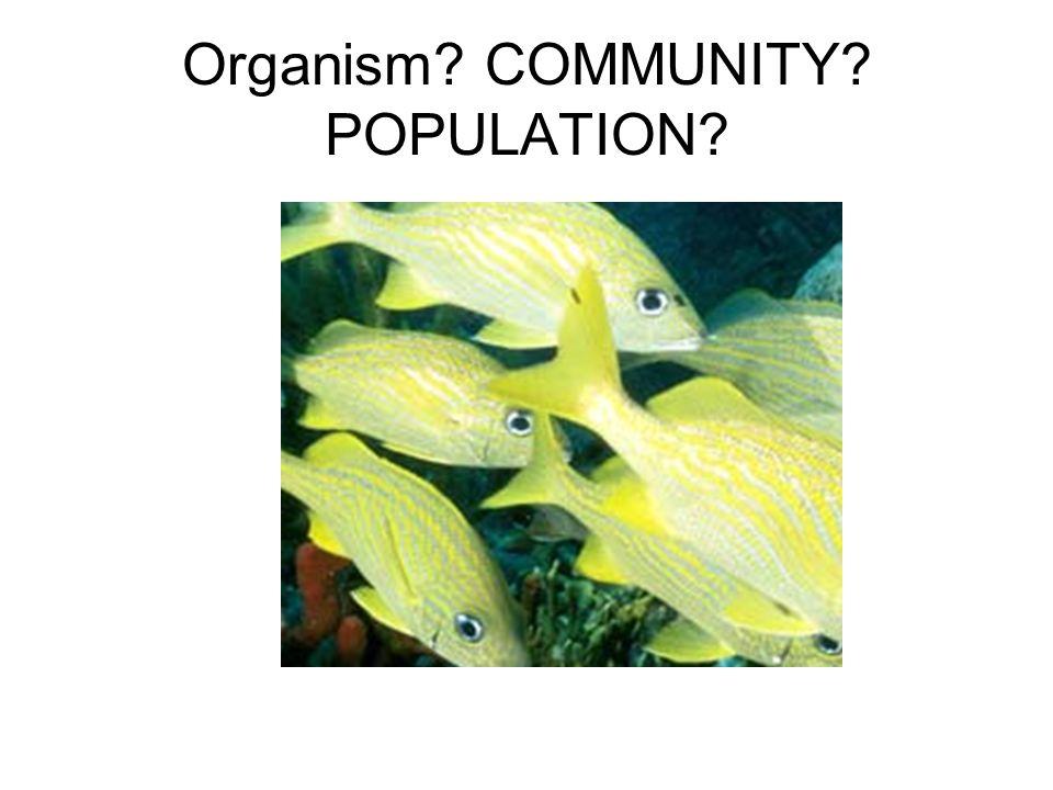 Organism? COMMUNITY? POPULATION?