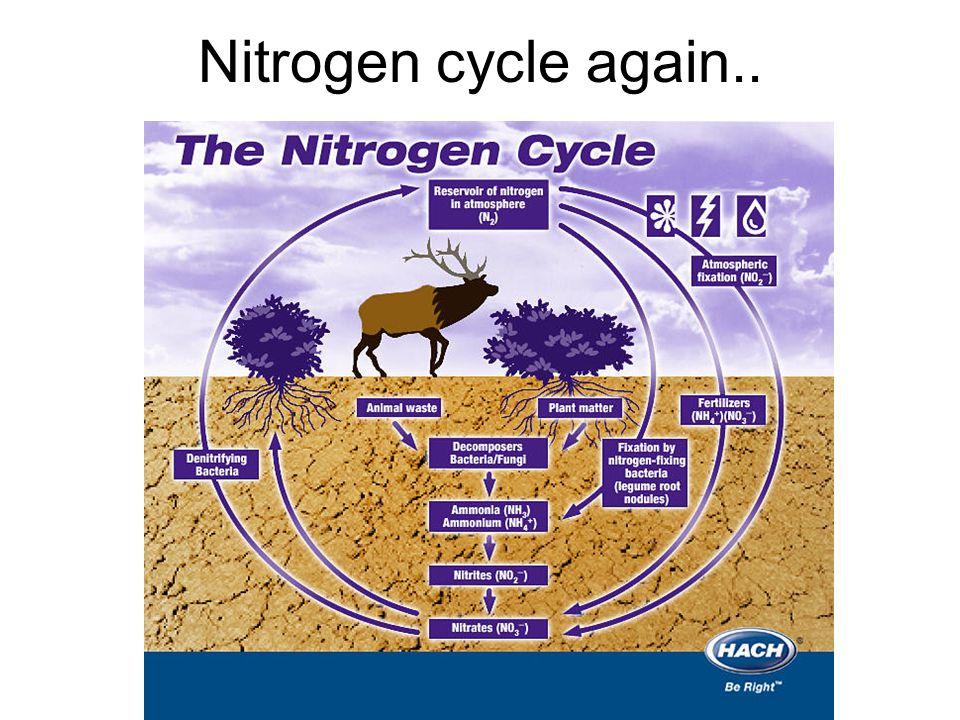 Nitrogen cycle again..