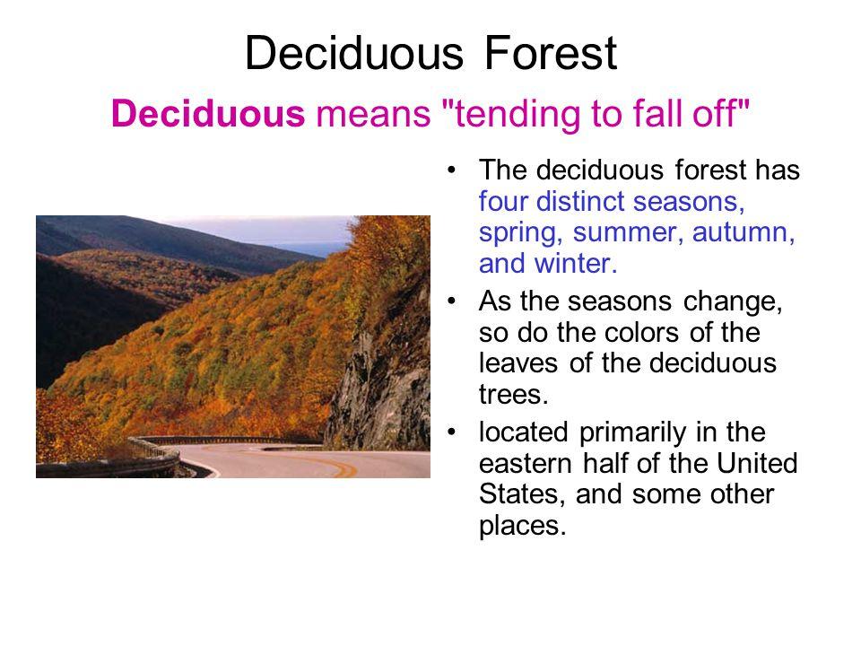 Deciduous Forest Deciduous means