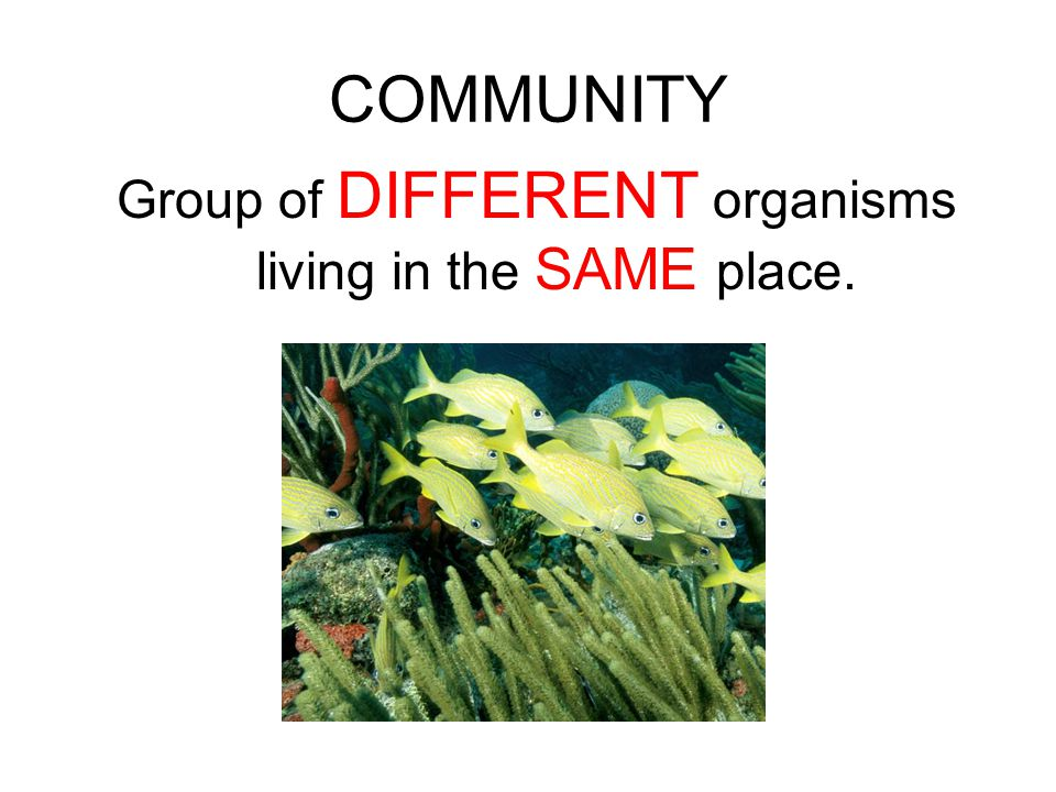 COMMUNITY Group of DIFFERENT organisms living in the SAME place.