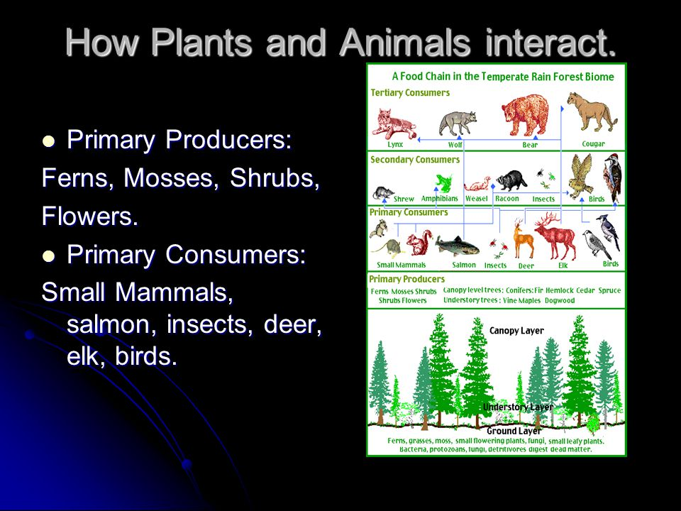 How Plants and Animals interact.