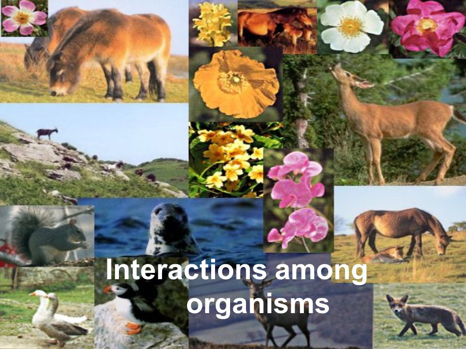 The study of how organisms interact with one another and their environment is called _____.