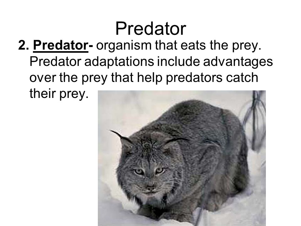 Predator 2. Predator- organism that eats the prey.
