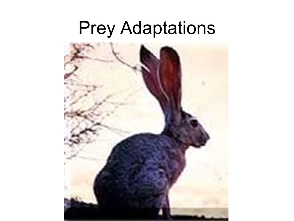 Prey Adaptations