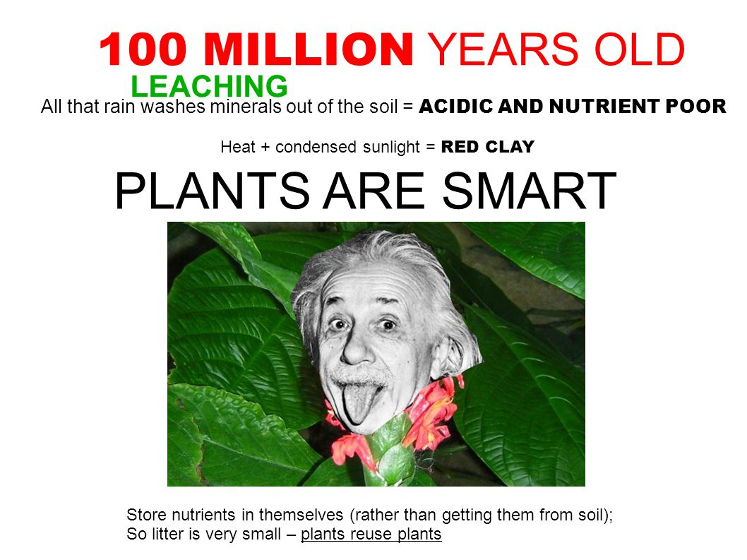 100 MILLION YEARS OLD All that rain washes minerals out of the soil = ACIDIC AND NUTRIENT POOR Heat + condensed sunlight = RED CLAY PLANTS ARE SMART Store nutrients in themselves (rather than getting them from soil); So litter is very small – plants reuse plants LEACHING