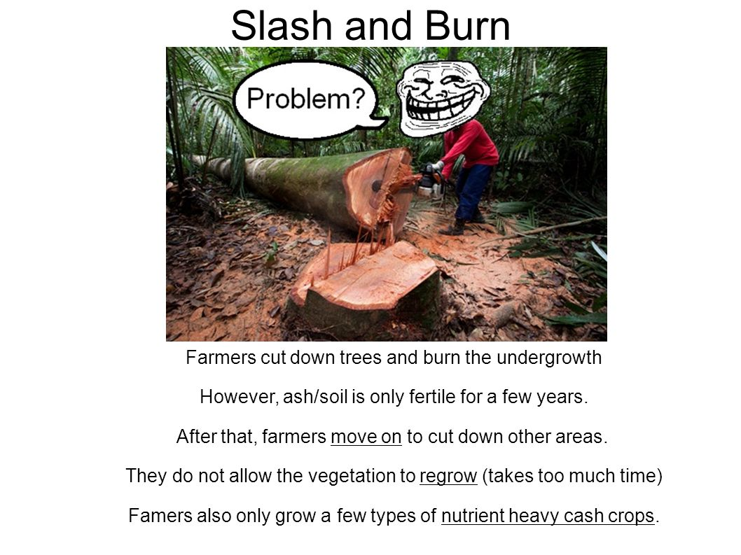 Slash and Burn Farmers cut down trees and burn the undergrowth However, ash/soil is only fertile for a few years.