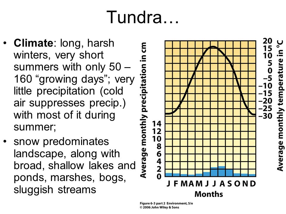 """Tundra… Climate: long, harsh winters, very short summers with only 50 – 160 """"growing days""""; very little precipitation (cold air suppresses precip.) wi"""