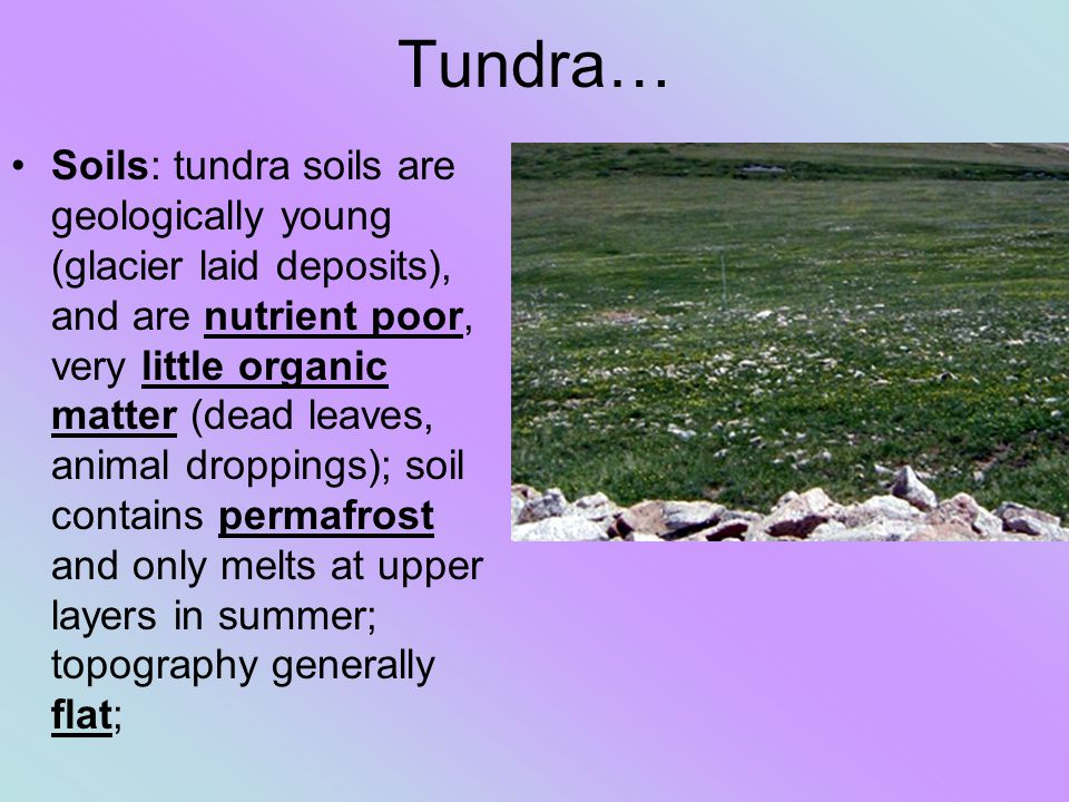 Tundra… Soils: tundra soils are geologically young (glacier laid deposits), and are nutrient poor, very little organic matter (dead leaves, animal dro