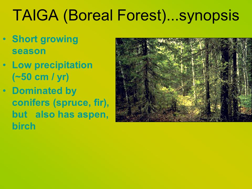 TAIGA (Boreal Forest)...synopsis Short growing season Low precipitation (~50 cm / yr) Dominated by conifers (spruce, fir), but also has aspen, birch