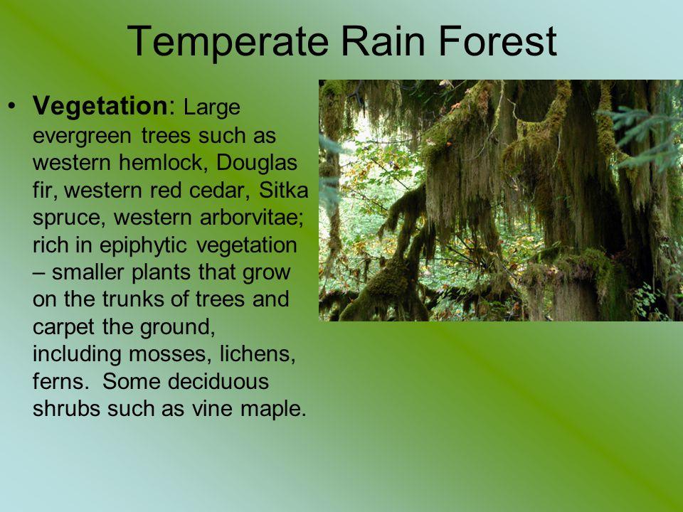 Temperate Rain Forest Vegetation: Large evergreen trees such as western hemlock, Douglas fir, western red cedar, Sitka spruce, western arborvitae; ric