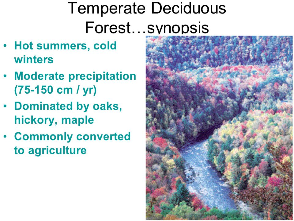Temperate Deciduous Forest…synopsis Hot summers, cold winters Moderate precipitation (75-150 cm / yr) Dominated by oaks, hickory, maple Commonly conve