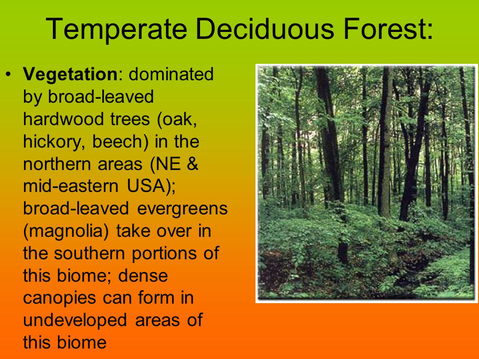 Temperate Deciduous Forest: Vegetation: dominated by broad-leaved hardwood trees (oak, hickory, beech) in the northern areas (NE & mid-eastern USA); b