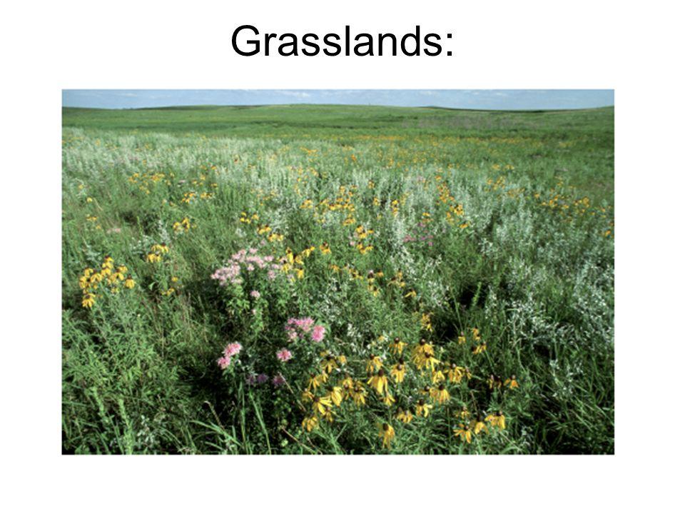 Grasslands: