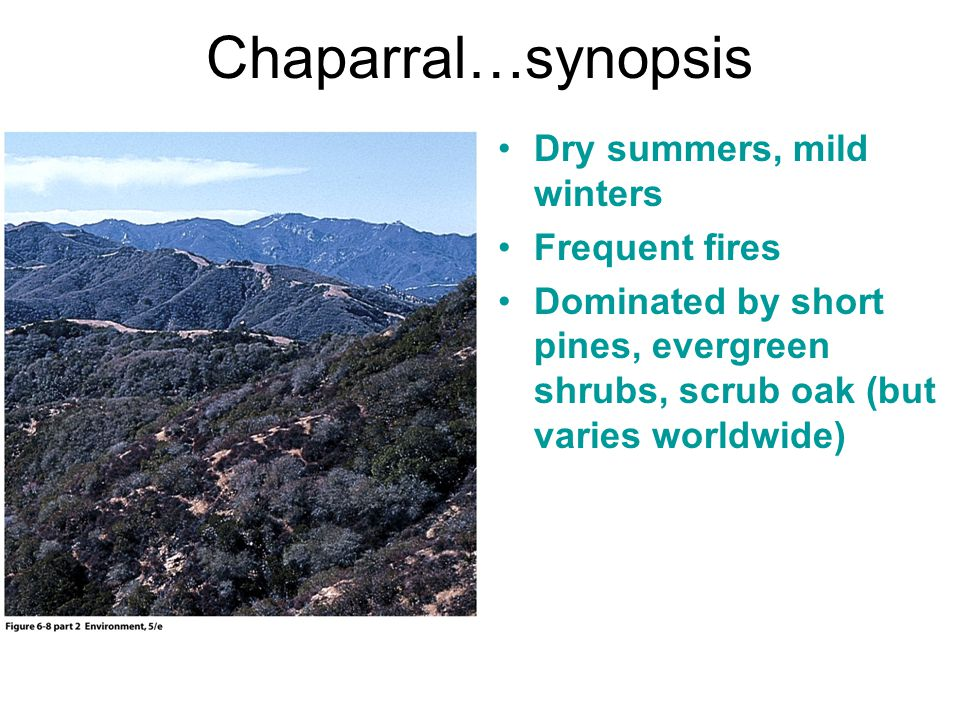 Chaparral…synopsis Dry summers, mild winters Frequent fires Dominated by short pines, evergreen shrubs, scrub oak (but varies worldwide)