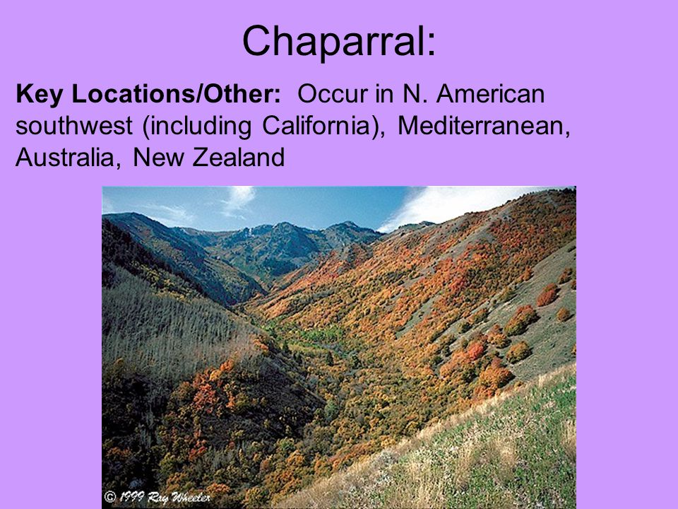 Chaparral: Key Locations/Other: Occur in N. American southwest (including California), Mediterranean, Australia, New Zealand