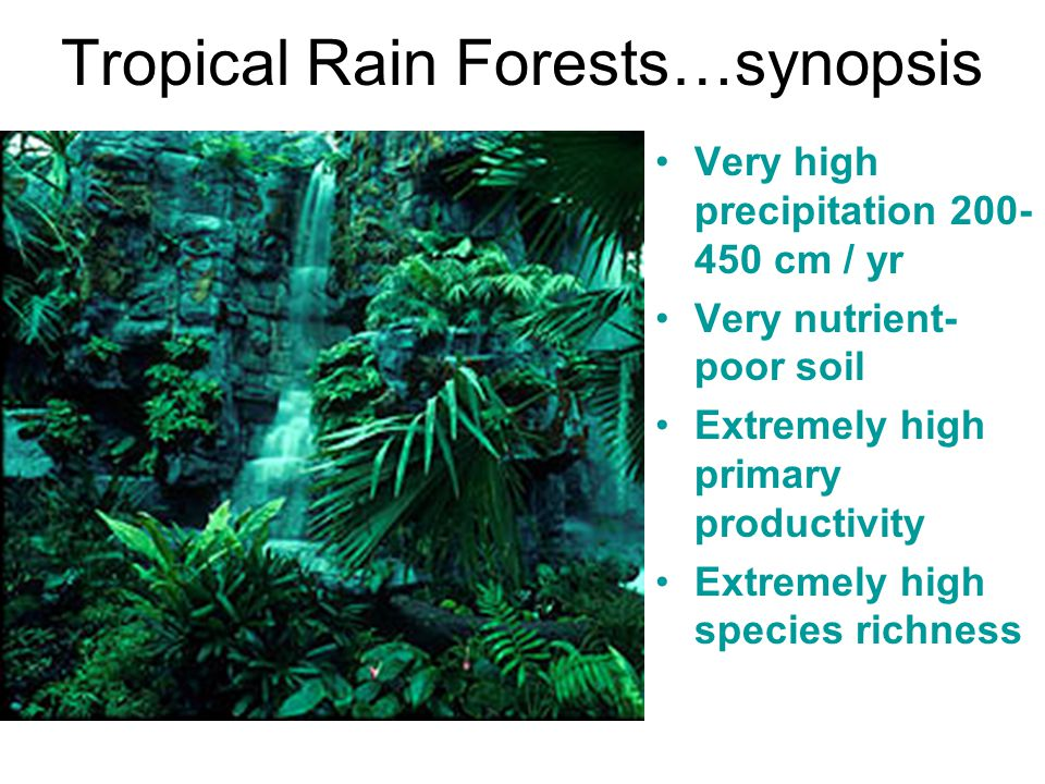 Tropical Rain Forests…synopsis Very high precipitation 200- 450 cm / yr Very nutrient- poor soil Extremely high primary productivity Extremely high sp