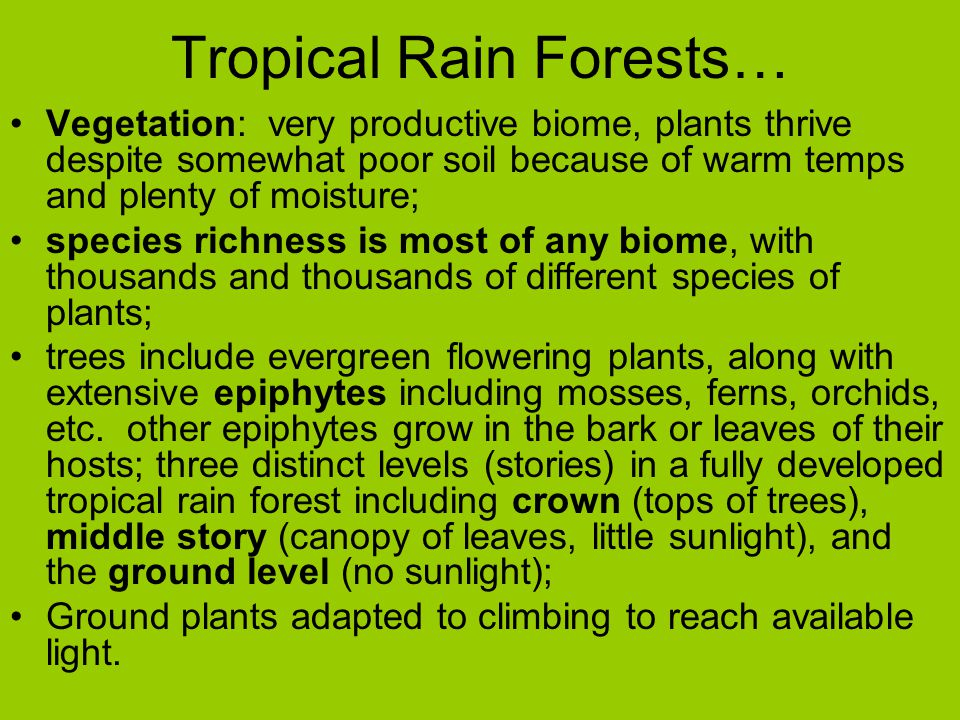 Tropical Rain Forests… Vegetation: very productive biome, plants thrive despite somewhat poor soil because of warm temps and plenty of moisture; speci