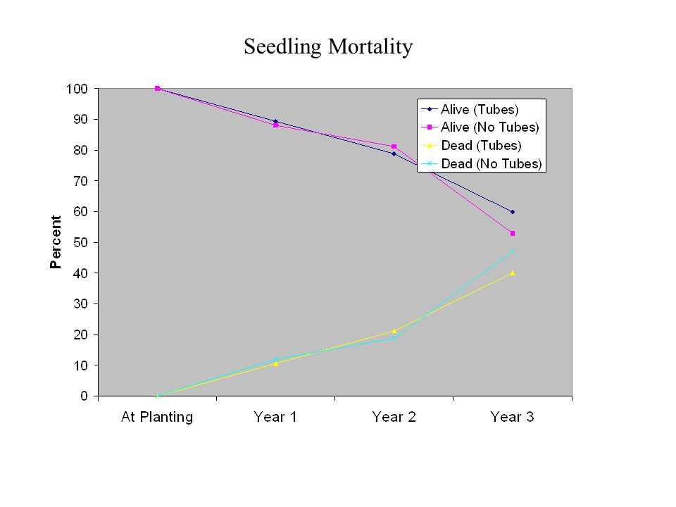Seedling Mortality