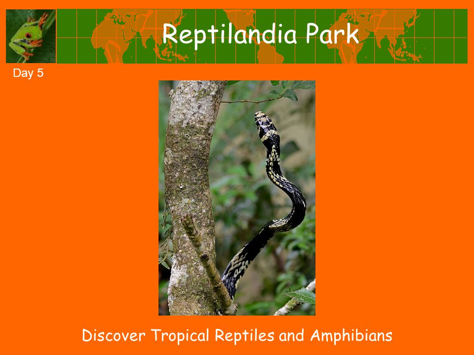 Reptilandia Park Day 5 Discover Tropical Reptiles and Amphibians