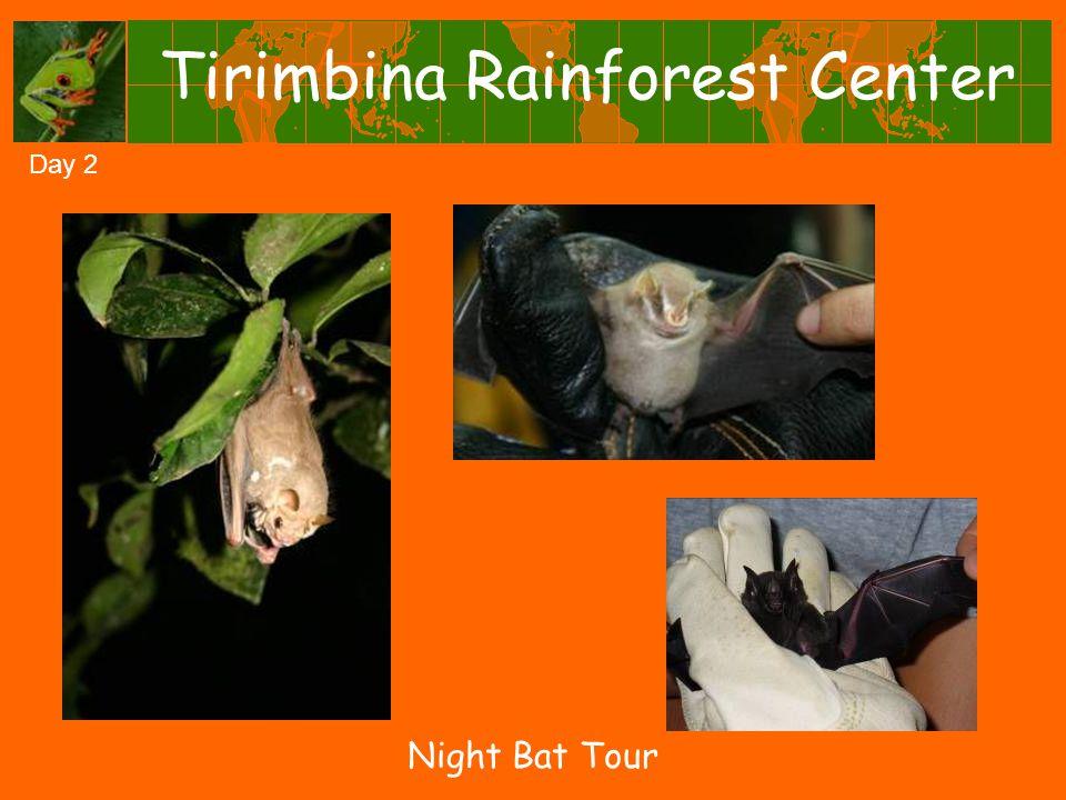 Tirimbina Rainforest Center Night Bat Tour Day 2