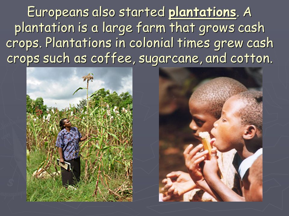 Europeans also started plantations. A plantation is a large farm that grows cash crops. Plantations in colonial times grew cash crops such as coffee,