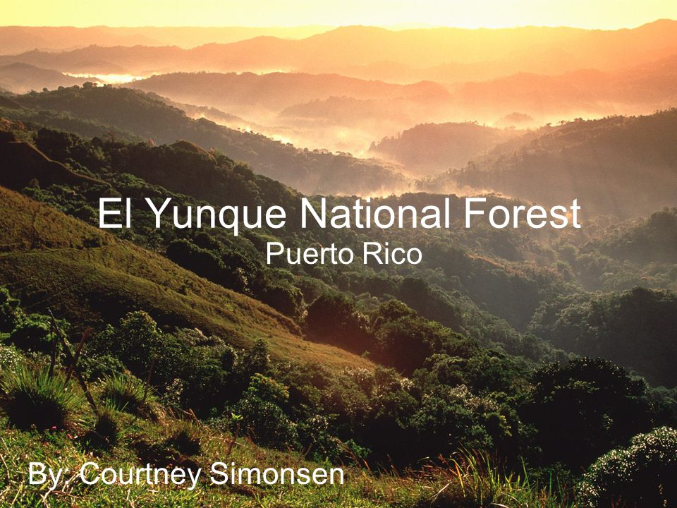 El Yunque National Forest Puerto Rico By: Courtney Simonsen