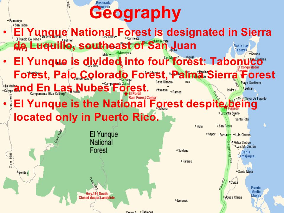 Geography El Yunque National Forest is designated in Sierra de Luquillo, southeast of San Juan El Yunque is divided into four forest: Tabonuco Forest, Palo Colorado Forest, Palma Sierra Forest and En Las Nubes Forest.