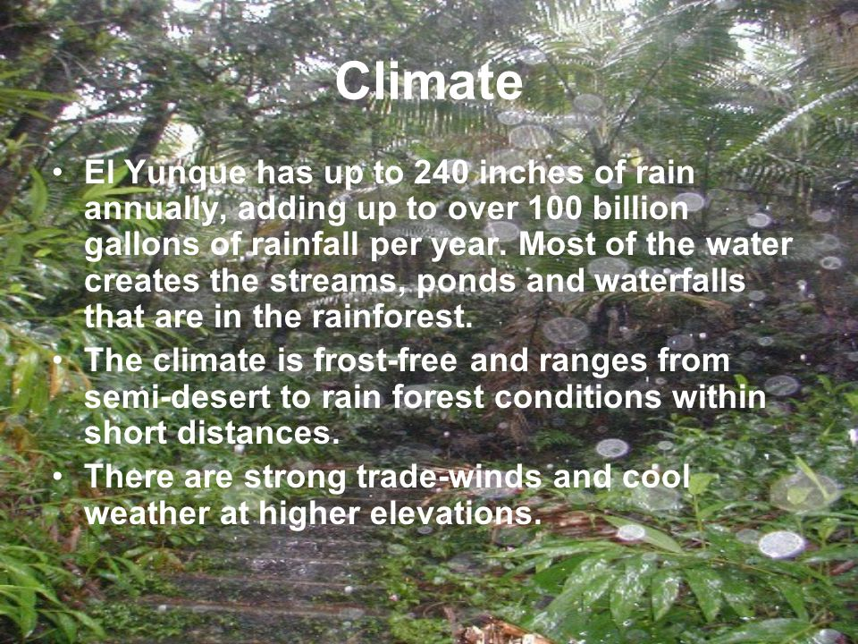 Climate El Yunque has up to 240 inches of rain annually, adding up to over 100 billion gallons of rainfall per year.