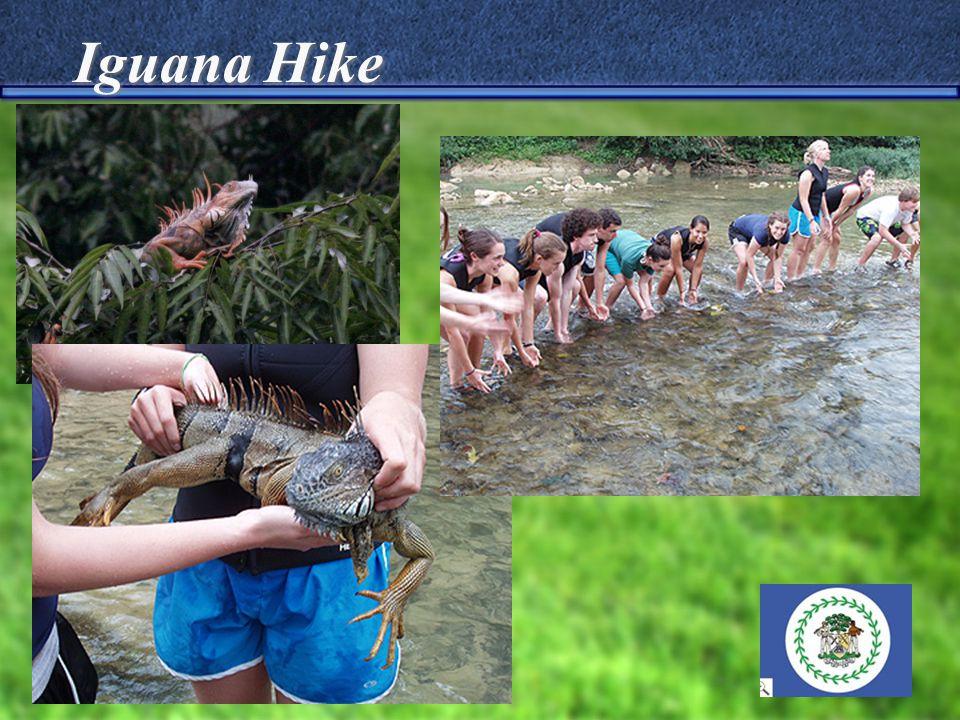Iguana Hike