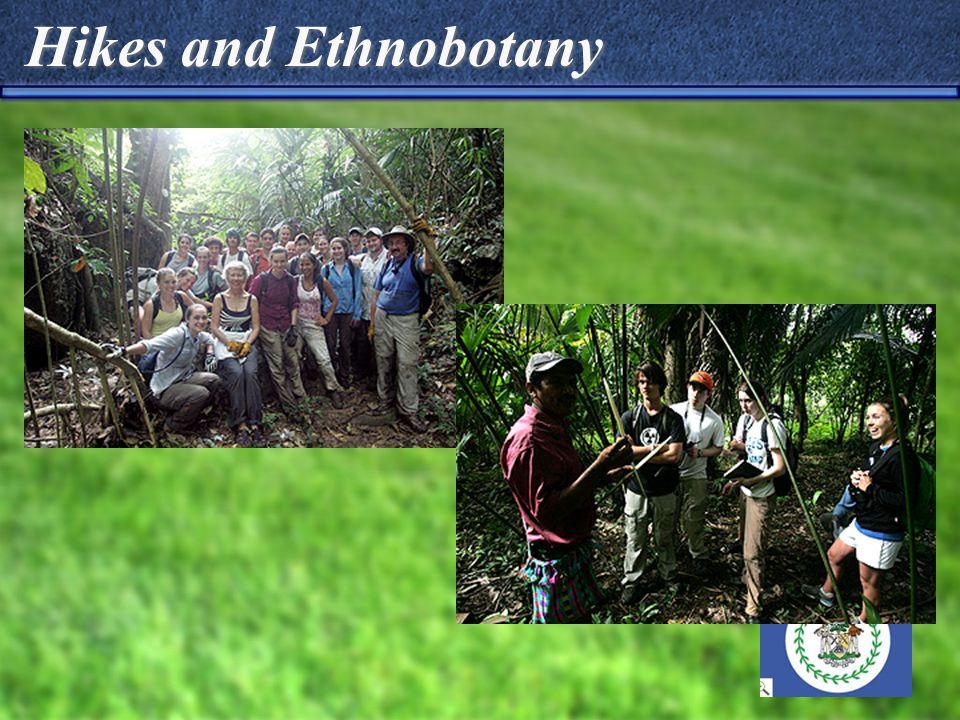 Hikes and Ethnobotany