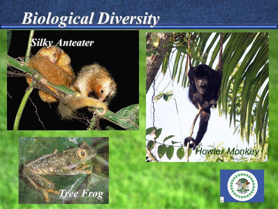 Silky Anteater Tree Frog Biological Diversity Howler Monkey