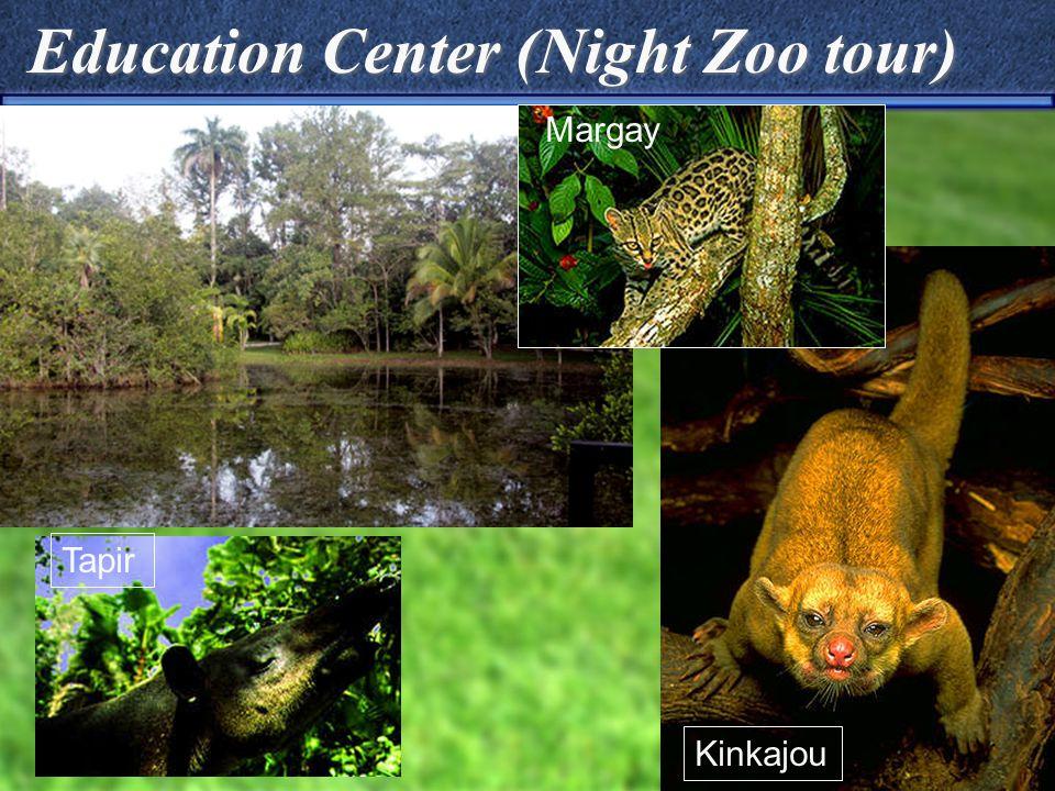 Education Center (Night Zoo tour) Kinkajou Margay Tapir