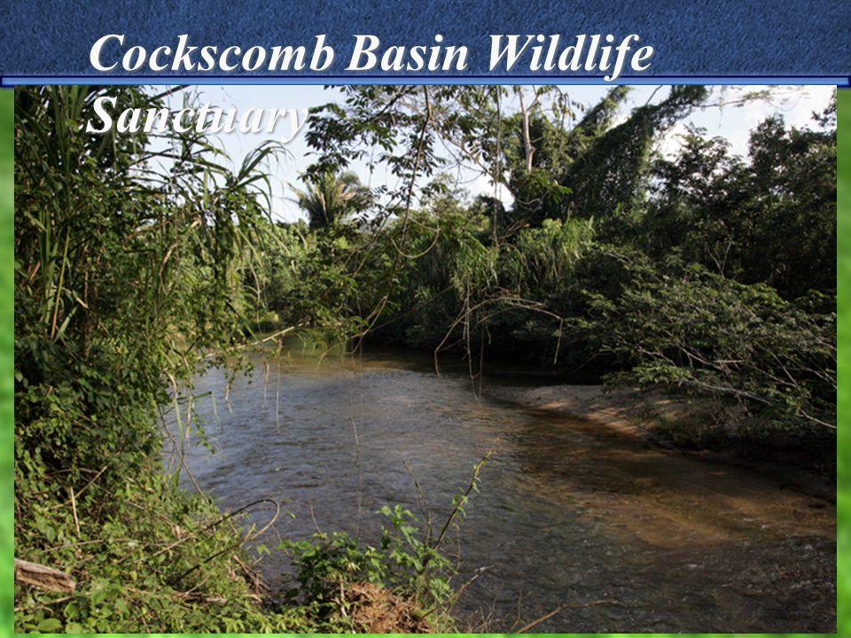 Cockscomb Basin Wildlife Sanctuary