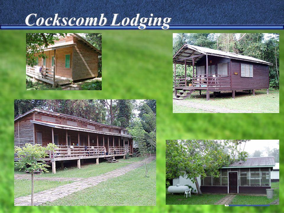 Cockscomb Lodging