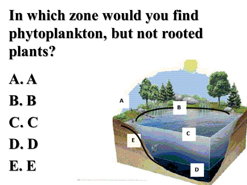 In which zone would you find phytoplankton, but not rooted plants? A. AB. BC. CD. DE. E