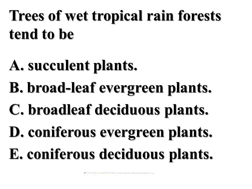 Trees of wet tropical rain forests tend to be A. succulent plants. B. broad-leaf evergreen plants. C. broadleaf deciduous plants. D. coniferous evergr