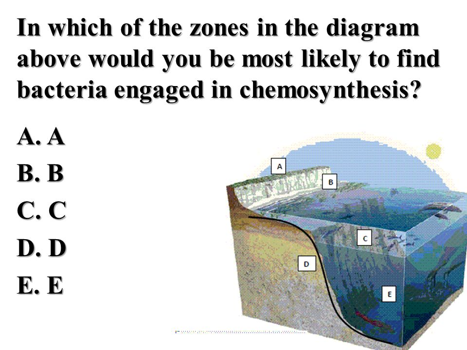 In which of the zones in the diagram above would you be most likely to find bacteria engaged in chemosynthesis.