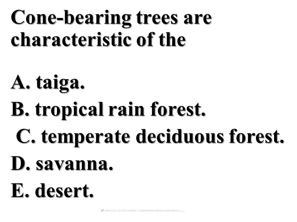 Cone-bearing trees are characteristic of the A.taiga.