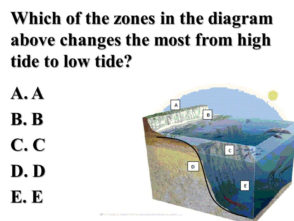 Which of the zones in the diagram above changes the most from high tide to low tide? A. AB. BC. CD. DE. E