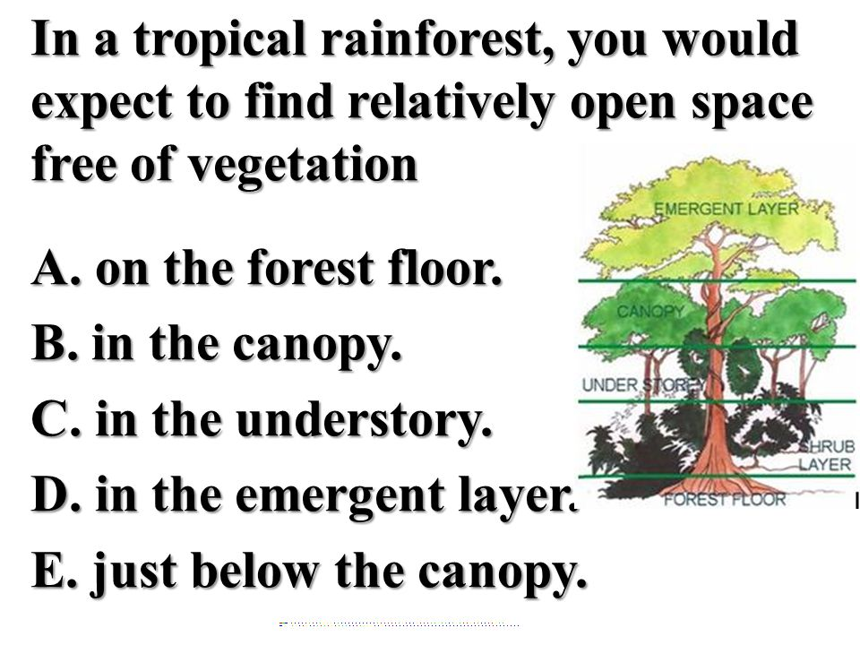 In a tropical rainforest, you would expect to find relatively open space free of vegetation A. on the forest floor. B. in the canopy. C. in the unders