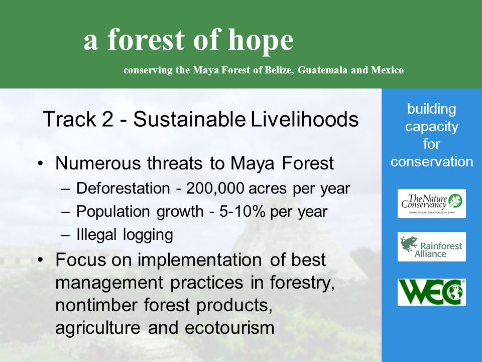 building capacity for conservation a forest of hope conserving the Maya Forest of Belize, Guatemala and Mexico Track 2 - Sustainable Livelihoods Numerous threats to Maya Forest –Deforestation - 200,000 acres per year –Population growth - 5-10% per year –Illegal logging Focus on implementation of best management practices in forestry, nontimber forest products, agriculture and ecotourism