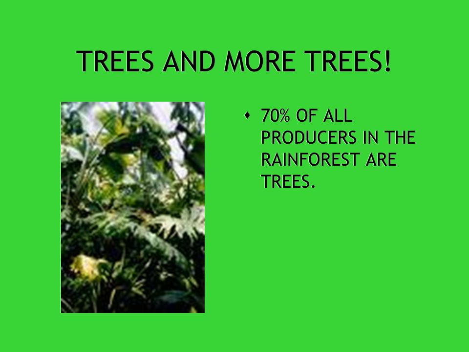 TROPICAL RAINFOREST PRODUCERS  TROPICAL RAINFORESTS HAVE MORE SPECIES OF TREES THAN ANY OTHER AREA IN THE WORLD.